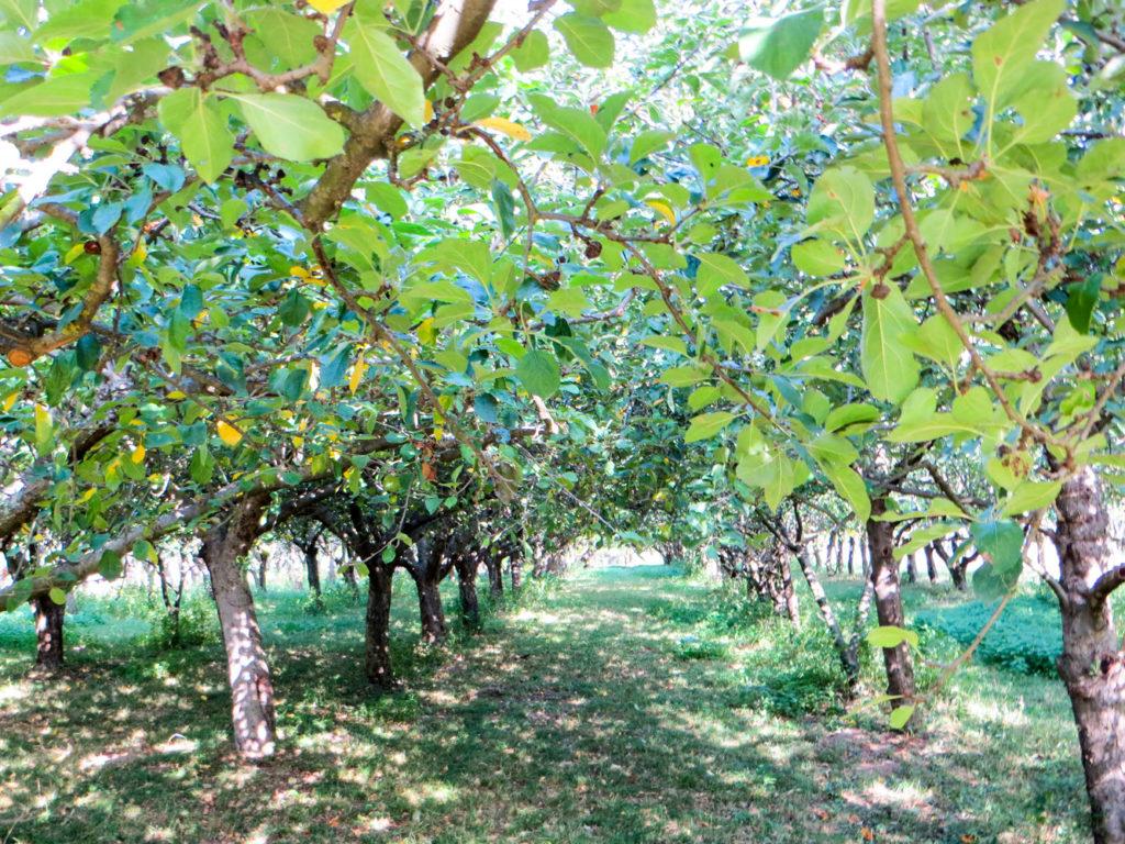 arboriculture-ret